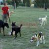 Amenajarea unui parc canin în Râmnicu Vâlcea