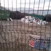 Video scandalos. Şobolanii Romprest-ului au invadat staţia de compost