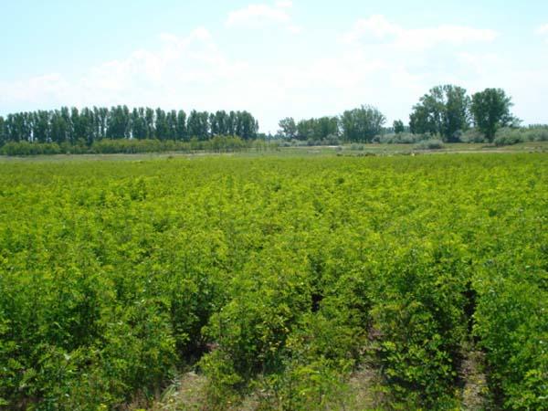 In fiecare an, Pepiniera Ionesti produce peste 1,5 milioane puieti