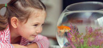 Cum să alegi acvariul potrivit pentru camera copilului?